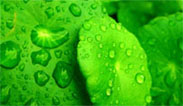 Imagen Onda Verde 3